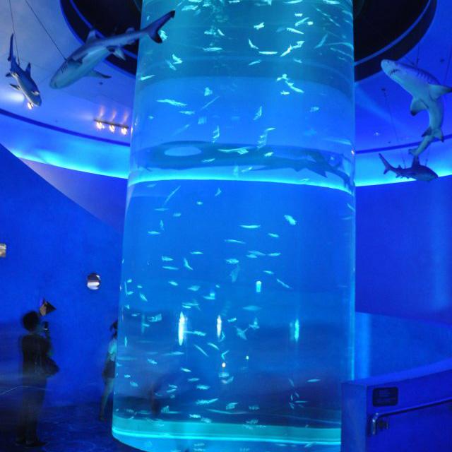 حوض السمك في عالم المياه