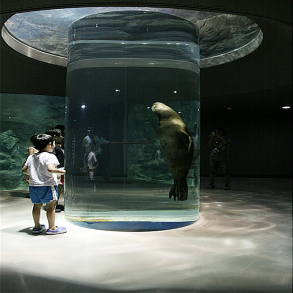 أحواض مخصصة لمشاهدة أسد البحر في عالم المحيطات