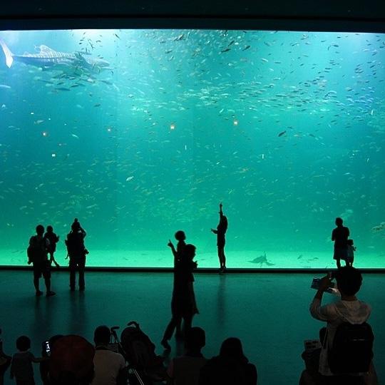 أحواض سميكة مخصصة لمشاهدة أسماك القرش
